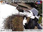 http://images30.fotosik.pl/12/e1e0ae99b8522110m.jpg