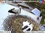 http://images30.fotosik.pl/13/eab66d6718cec15cm.jpg