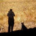 pies czeka #pies #natura #cień