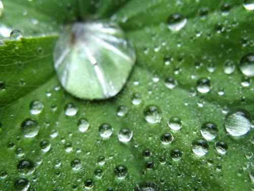 #deszcz #liście #makro #ogród #kropelki