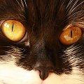 #koty #zwierzęta #oczy