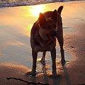 wschód słońca kąpiel czworonoga po raz 2:) #pies #czworonóg #morze #wschód #słóńce #woda #zabawa