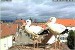 http://images30.fotosik.pl/177/ff2c6cef1d95a5b6m.jpg