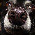 #pies #piesek #pieseczek #piesio #zwierzęta #beja #bejka #mój