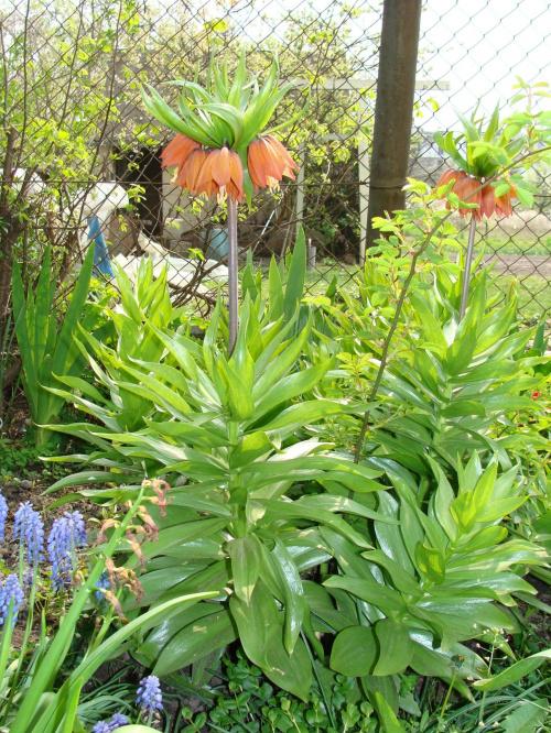 Roślinki prosto z ogródka #kwiatki #kwiatuszki #kwiaty #ogród #rośliny