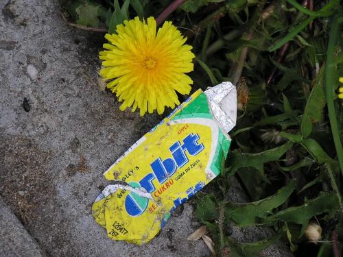 Pamietaj o gumie wiosna #guma #prezerwatywa #przyroda