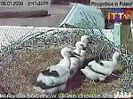 http://images30.fotosik.pl/226/93711ca69a06c3e3m.jpg