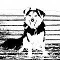 Mój piesek ;* #pies #tygrys