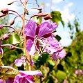 Na łące... #łąka #rośliny #kwiaty #lato #przyroda #natura #flora #fauna #botanika #płatki