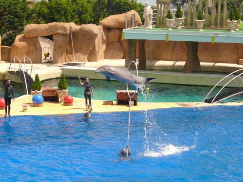 Pokazy akrobatyczne z udziałem delfinów #Marineland