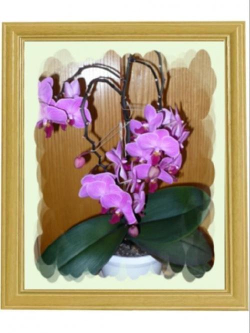 """""""storczyk jak z obrazka"""" #kwiaty #przyroda #obrazek"""