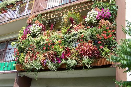 Mój balkon wrzesień 2008r #Balkon #kwiaty #KwiatyBalkonowe #surfinie #koleusy