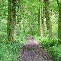 Zielono mi #zielono #drzewa #natura #przyroda #ścieżka #las