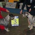 Exclusive Eaton Alarm Beskyd exc 3, Nois Epocha Rockefeller exc 4 klasa championów psy