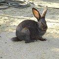 #króliczek #wieś