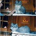zdjecia moich kotkow przeslicznych :) #koty #ola #dzius #ogród