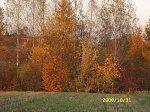 http://images30.fotosik.pl/291/d0287720e3be532fm.jpg