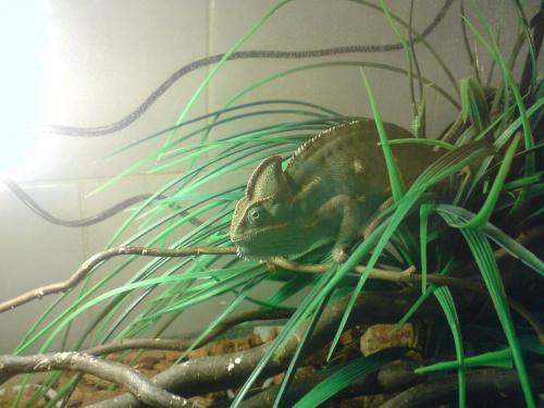 Nazywam się LEON,KameLeon. :-) #Kameleon