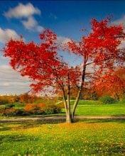 http://images30.fotosik.pl/322/2ac67a649bedd1a3.jpg