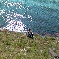 A co powiecie na wypoczynek nad rzeczka? #kaczka #kaczuszka #relax #woda #odpoczynek #trawka #impresja