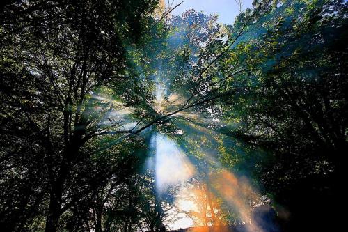 #las #światło #mistyka #bajka